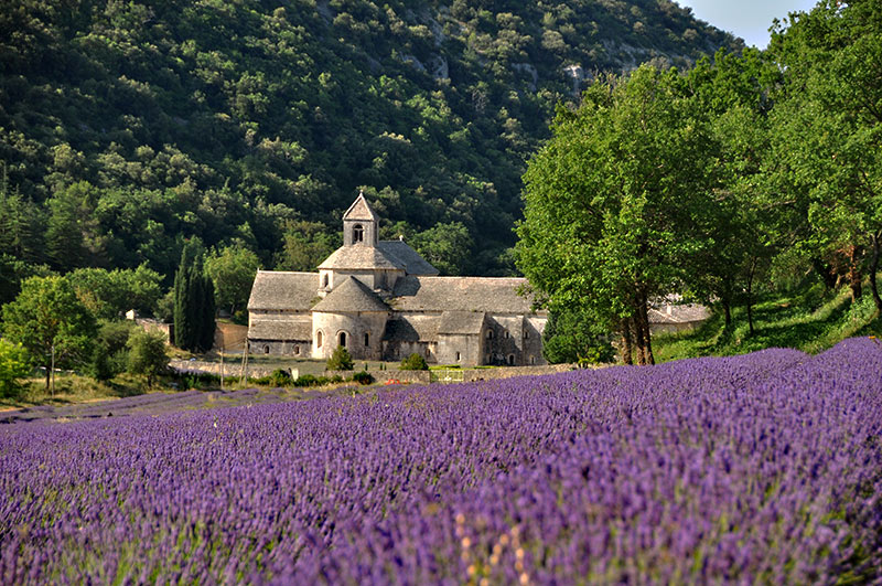 abbaye-senanque2